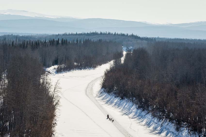 A musher on the Yukon River between Ruby and Galena. Mar 7, 2014