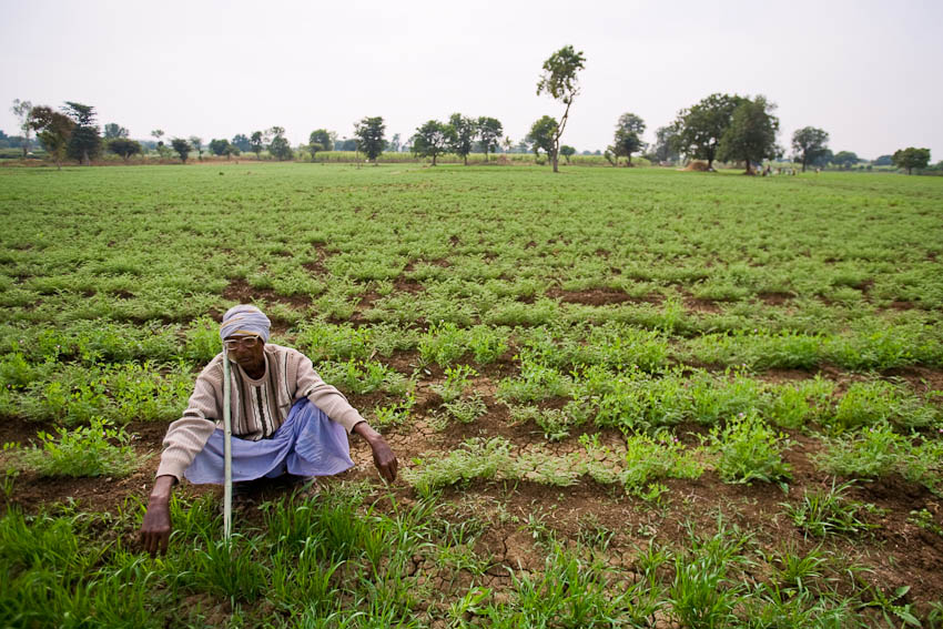 72-year old farmer resting in his field of chickpeas, Maharashtra